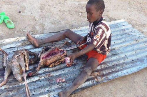 Article : Nord du Cameroun : ces images des orphelins victimes du terrorisme m'ont arraché une larme